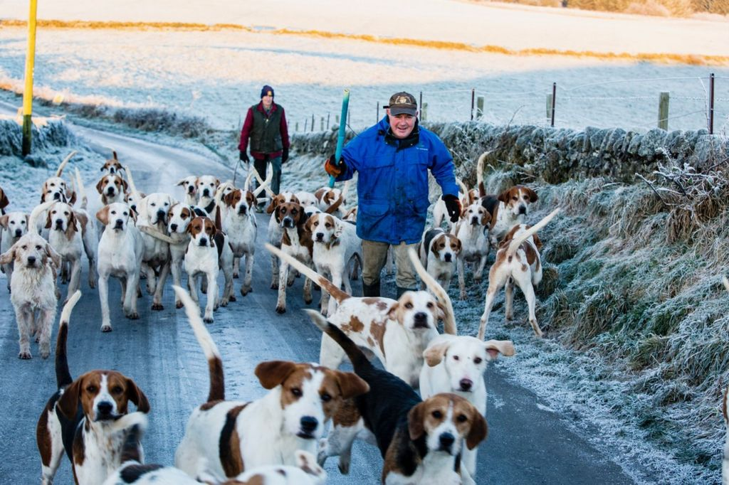 hounds in snow