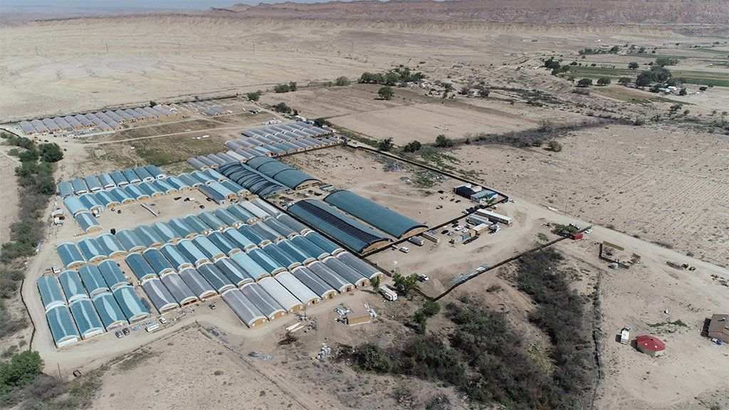 An aerial shot of the cannabis farms last summer in Shiprock, New Mexico