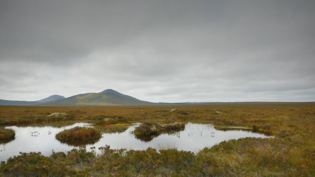 The bog swarming with scientists and artists - BBC News