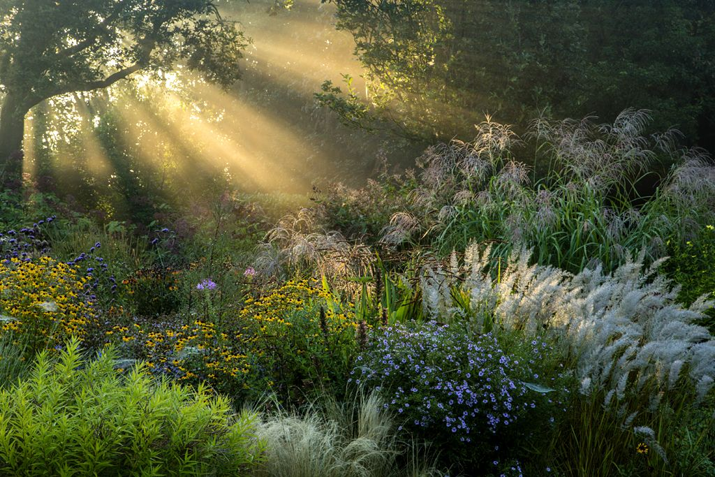 First Rays by Volker Michael