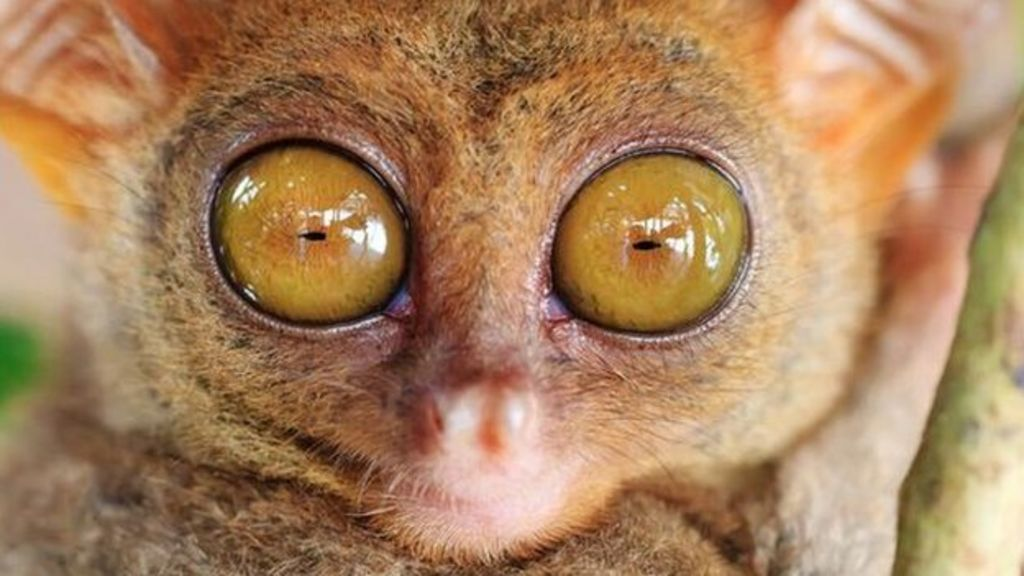 Animals with 'night vision goggles' - BBC News