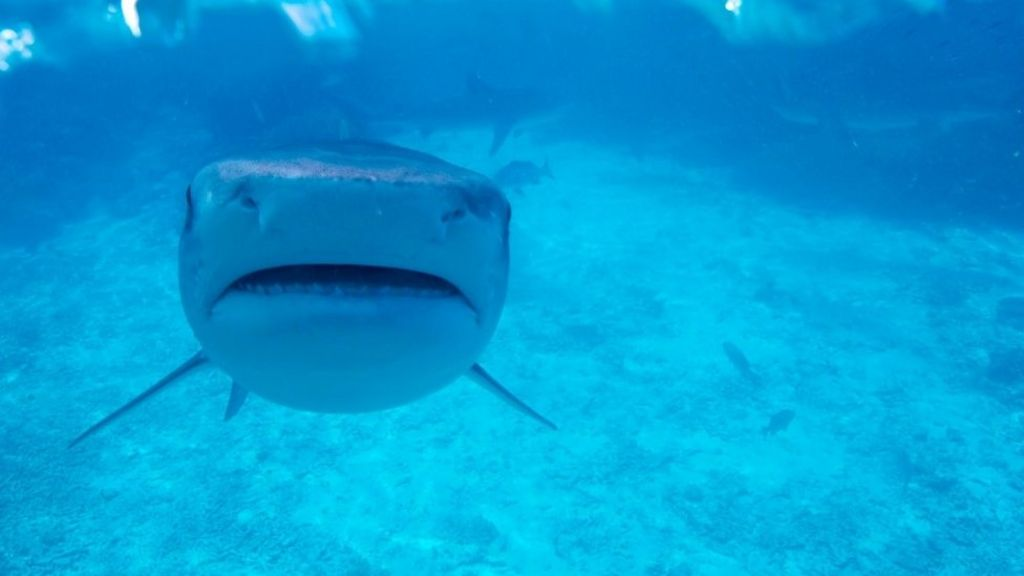 Why sharks like it hot - but not too hot - BBC News