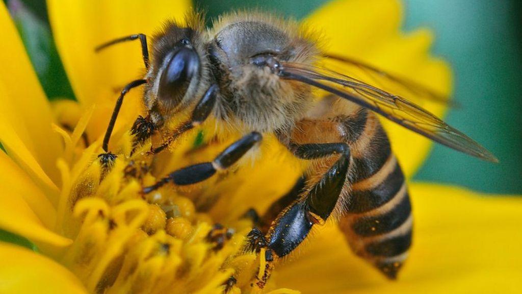 polen schottland live