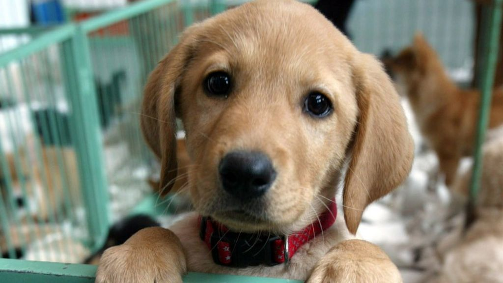Puppy and kitten sales at pet shops set to be banned - BBC News