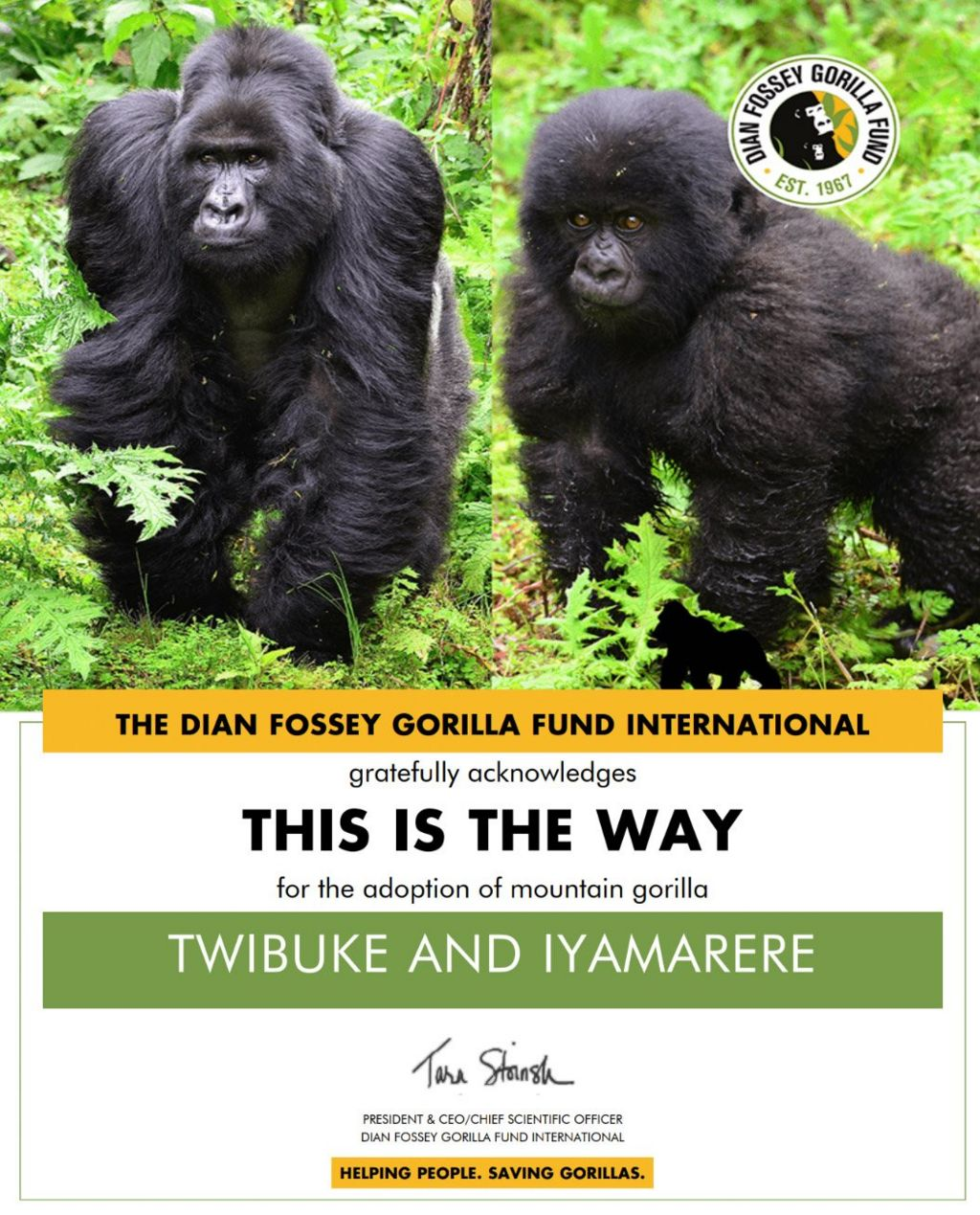 Gorillas Twibuke and Iyamarere pictured as part of a charity adoption certificate.