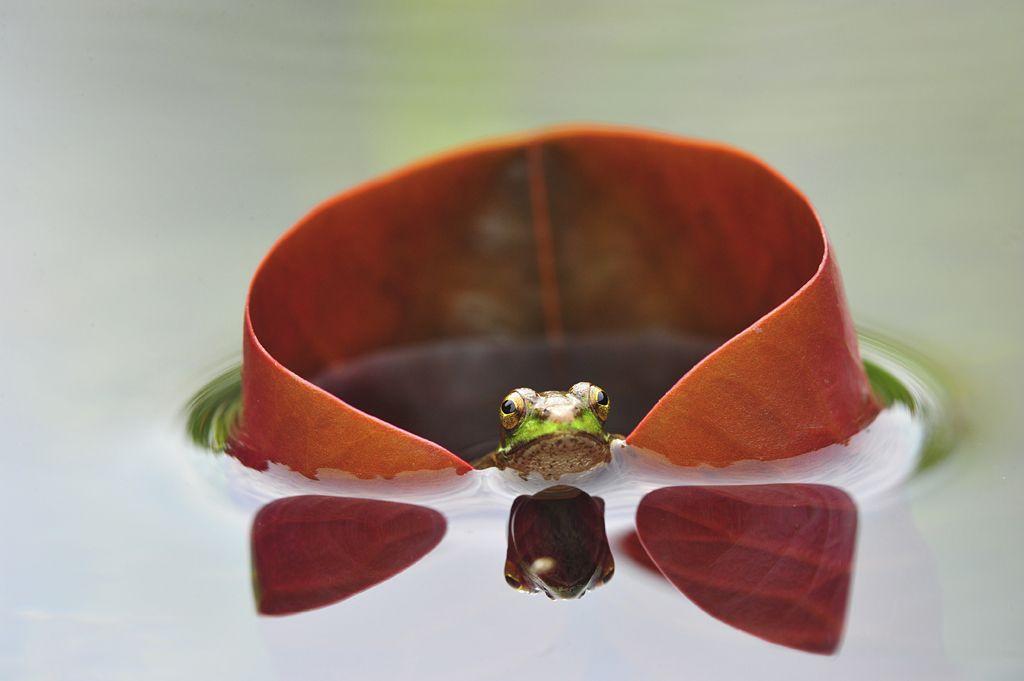 Frog Prince by Minghui Yuan