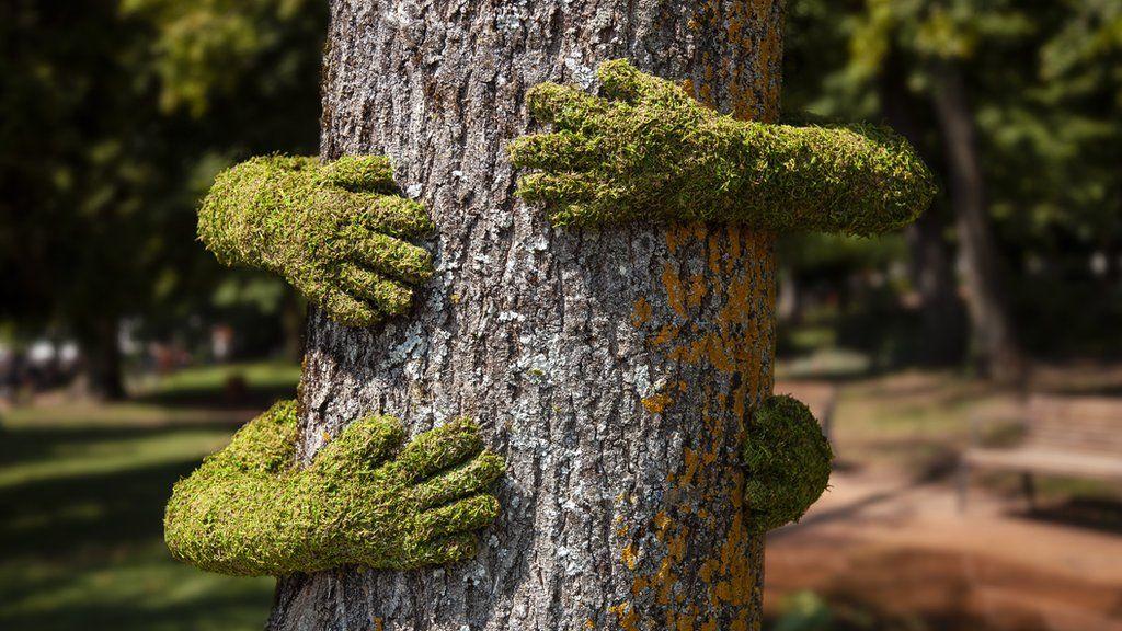 Tree Hug by Monsieur Plant