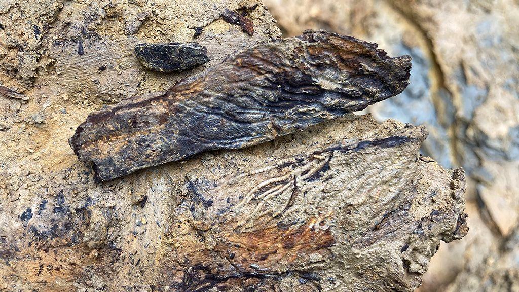 Jurassic wood