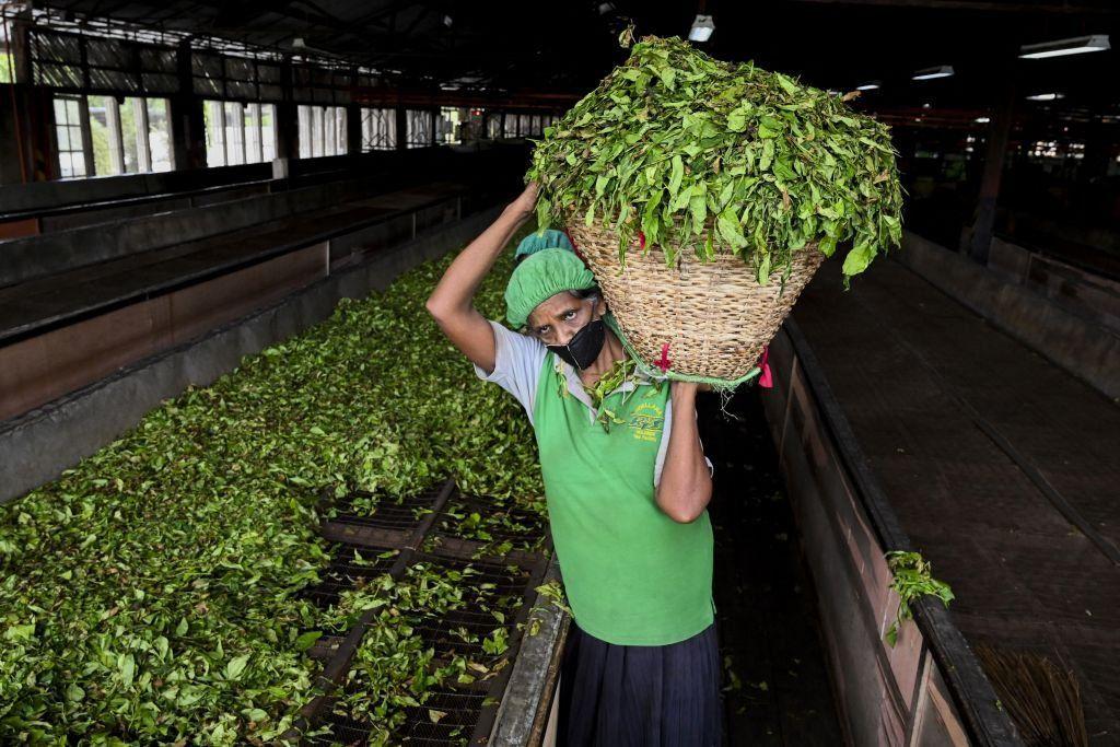 Going organic poses threats to Sri Lanka's well-known tea industry