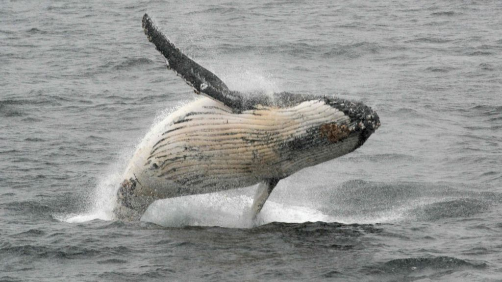 bbc.co.uk - Brazil meeting votes to protect world's whale population