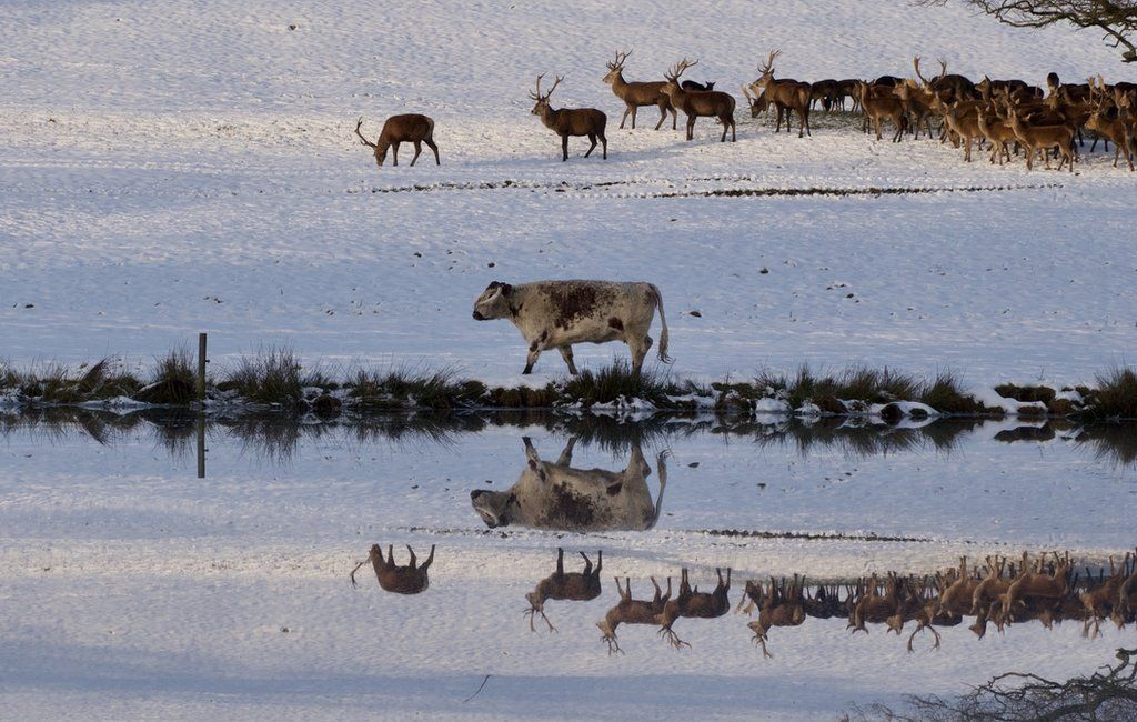 Reflections on the top pond featuring the the Longhorn Cattle and Red Deer