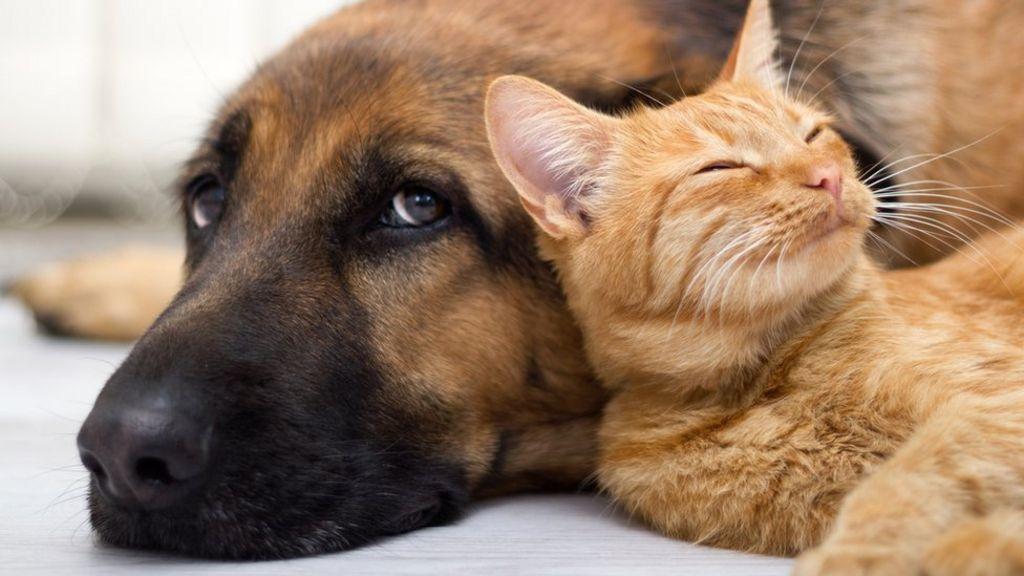 Coronavirus Pets At Home Seeing Exceptional Demand Bbc News