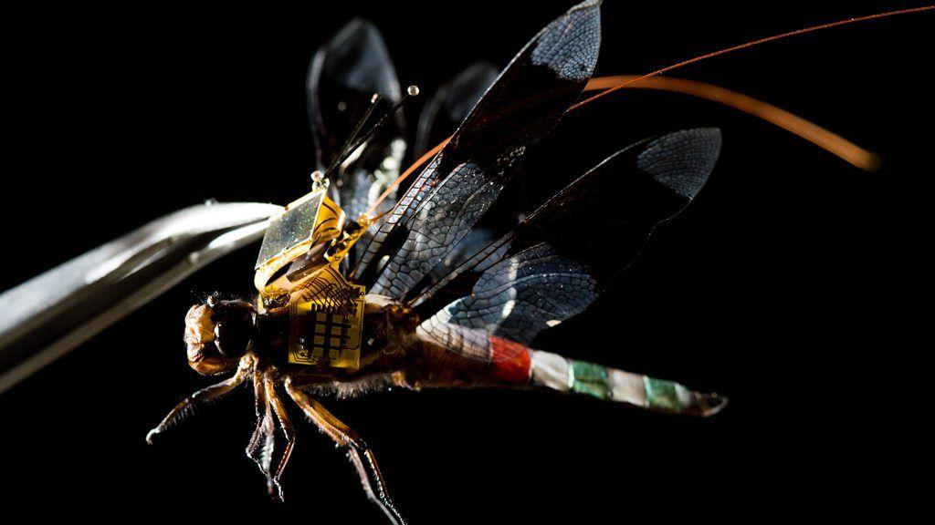 Living dragonfly drones take flight