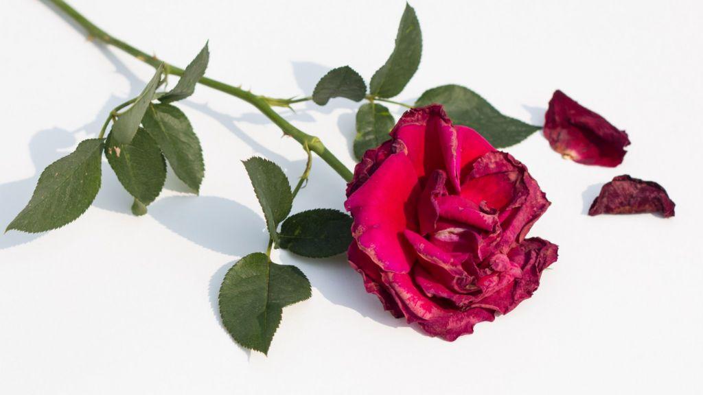 Online Chat & Dating in Trim   Meet Men & Women in Trim