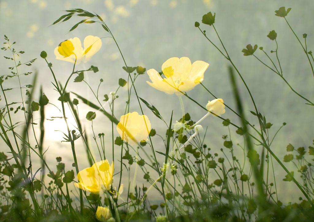 Bothering Buttercups by Angela de Groot