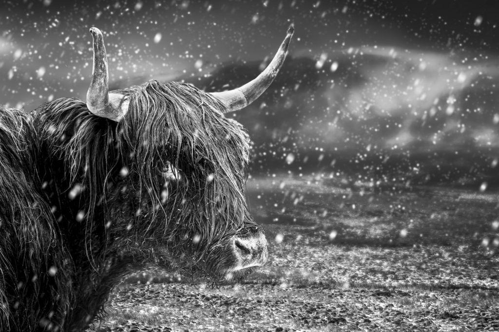 O leia mae gan hwn got drwchus i'w gadw'n gynnes yn yr eira // At least he's got a thick coat to keep warm in the snowstorm