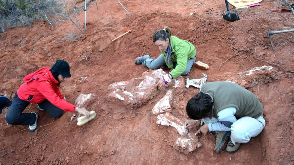 Fossil of 'first giant' dinosaur discovered in Argentina - BBC News