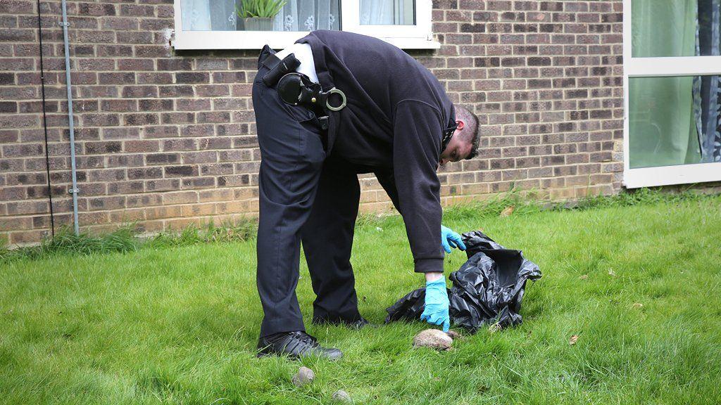 Police officer picks up a dead cat