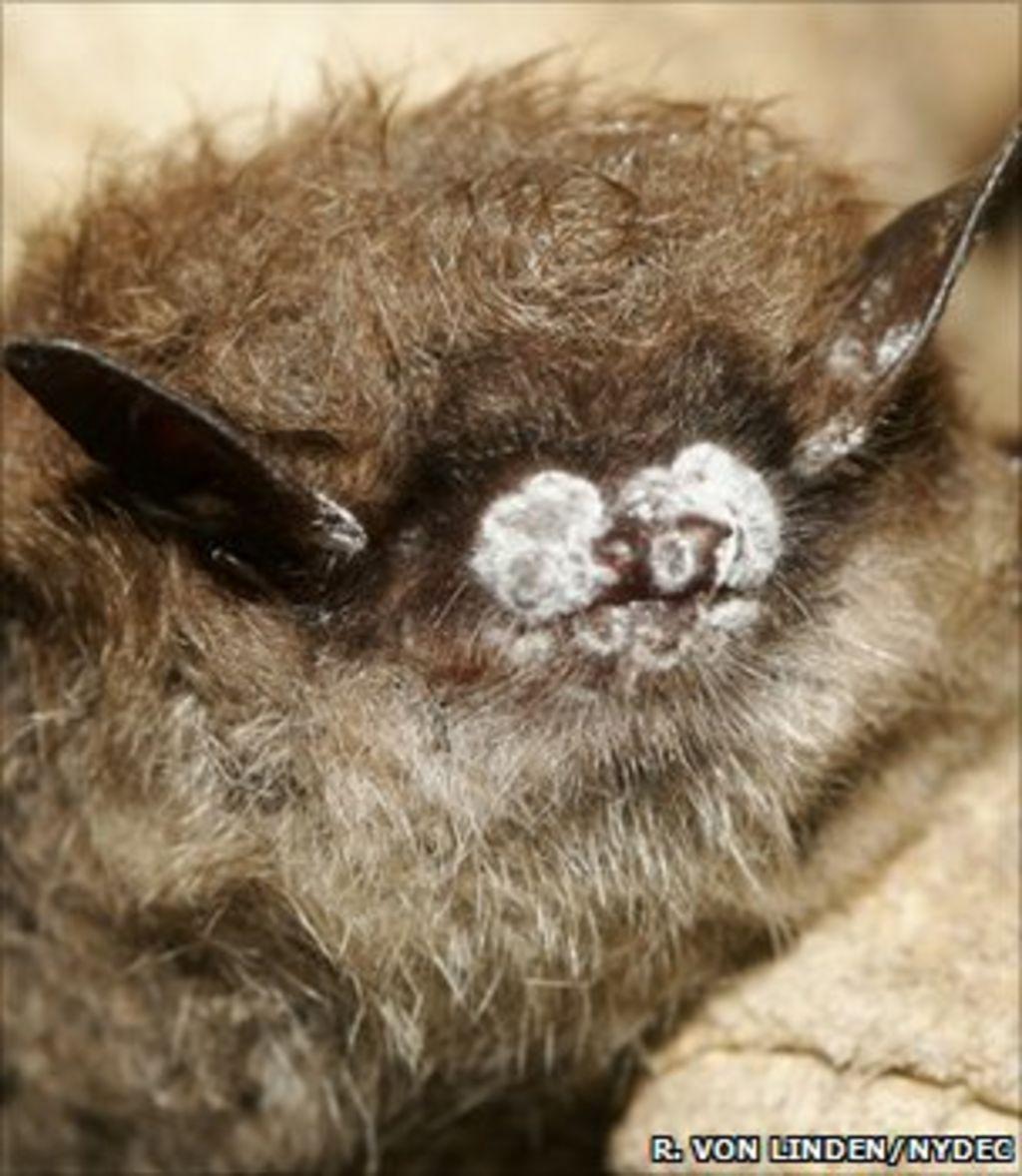 cold war bunkers offer bats refuge from killer disease bbc news