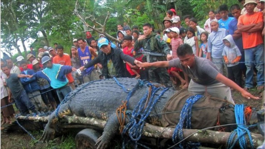 Philippine giant croc captured after three-week hunt - BBC ...