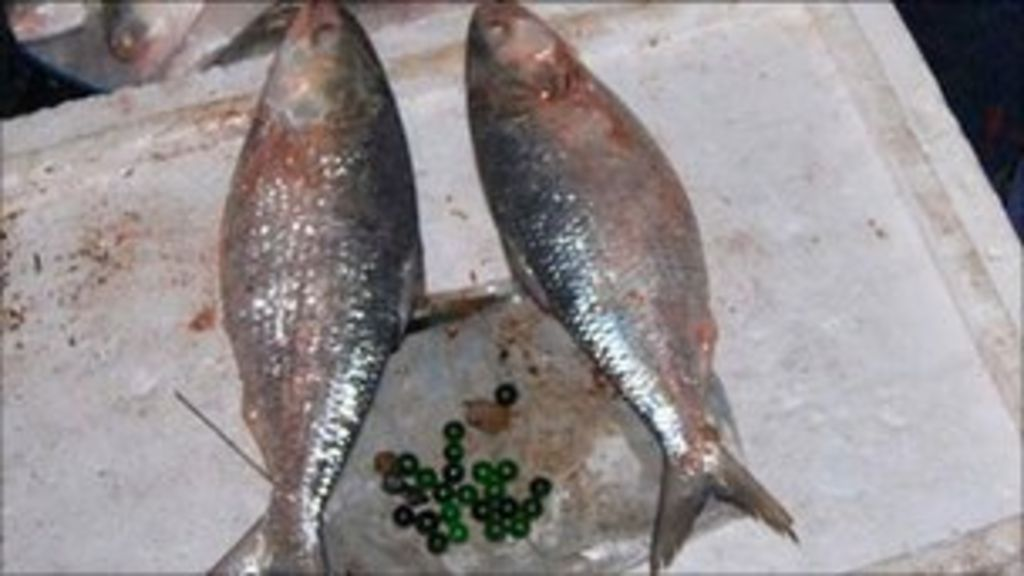 Marble-stuffed hilsa scam' deceives buyers in Bangladesh - BBC News