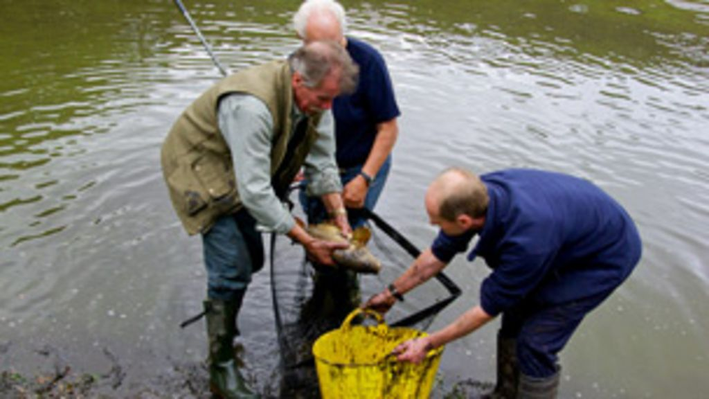 Shropshire anglers rescue dying fish - BBC News