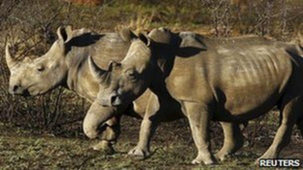 politicians and poachers essay