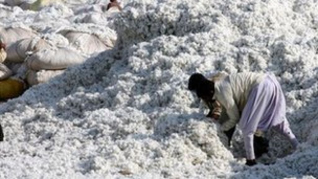 cotton export Wardha, india, nov 23 (reuters) - india is likely to export nearly one-fifth less cotton than previously estimated as pink bollworms are set to eat into the south asian country's output which was expected to hit a record, industry officials told reuters on thursday lower exports from the world.