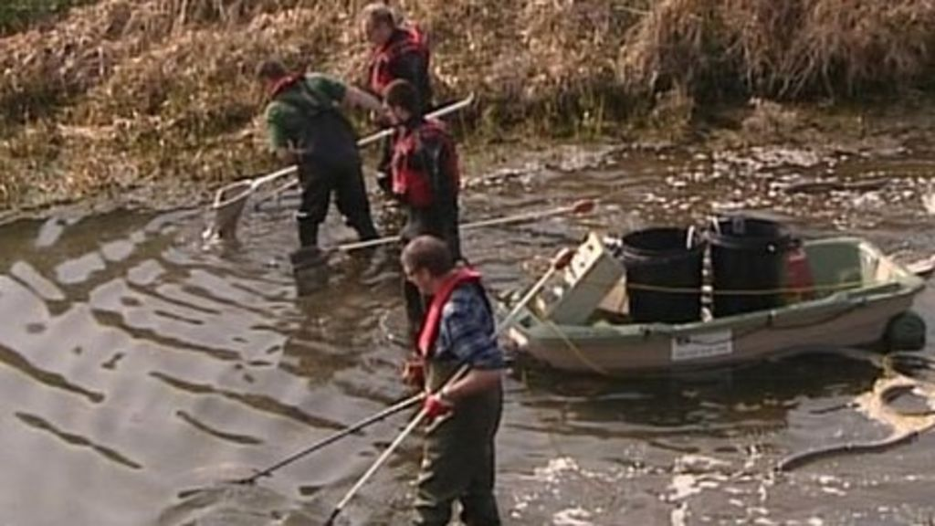 Fish rescued as drought takes toll bbc news for Direct tv fishing channel
