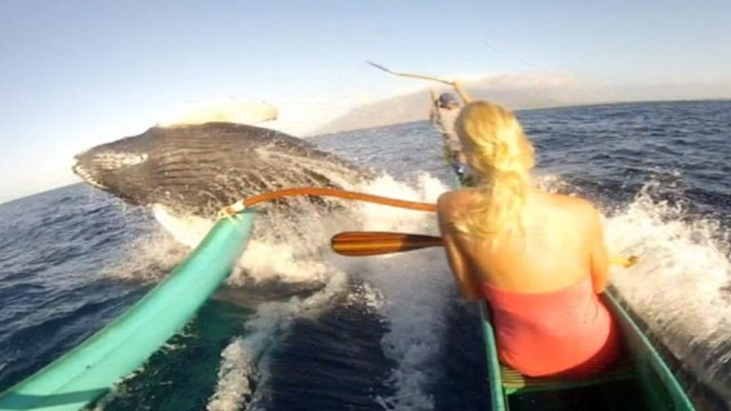 whale hits holidaymakers 39 canoe bbc news. Black Bedroom Furniture Sets. Home Design Ideas