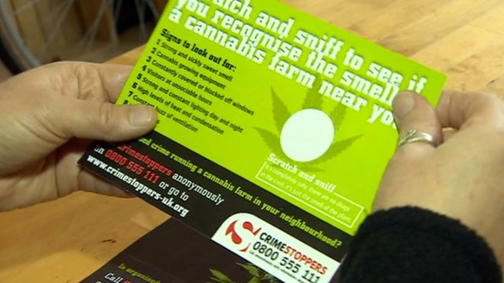 Cannabis scratch and sniff cards to track down farms bbc news colourmoves