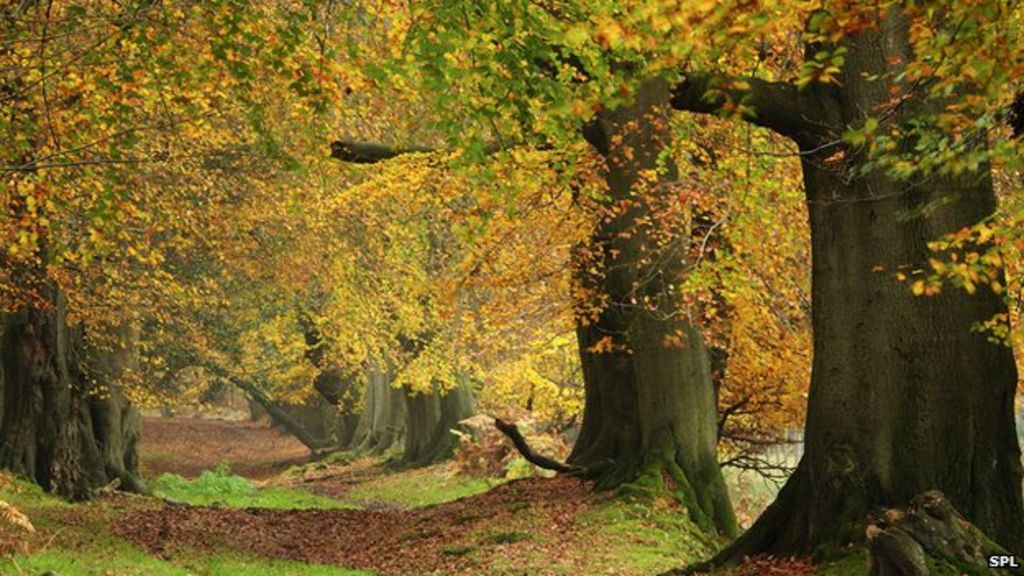 d629441fb5f50 UK forests still feeling the impacts of 1976 drought - BBC News