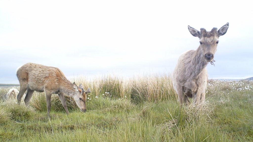 bog life  animals photographed on rspb reserve