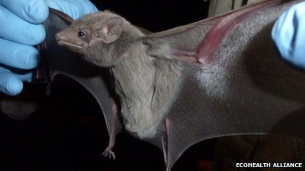 Mers Deadly Coronavirus Found In Tomb Bat Bbc News