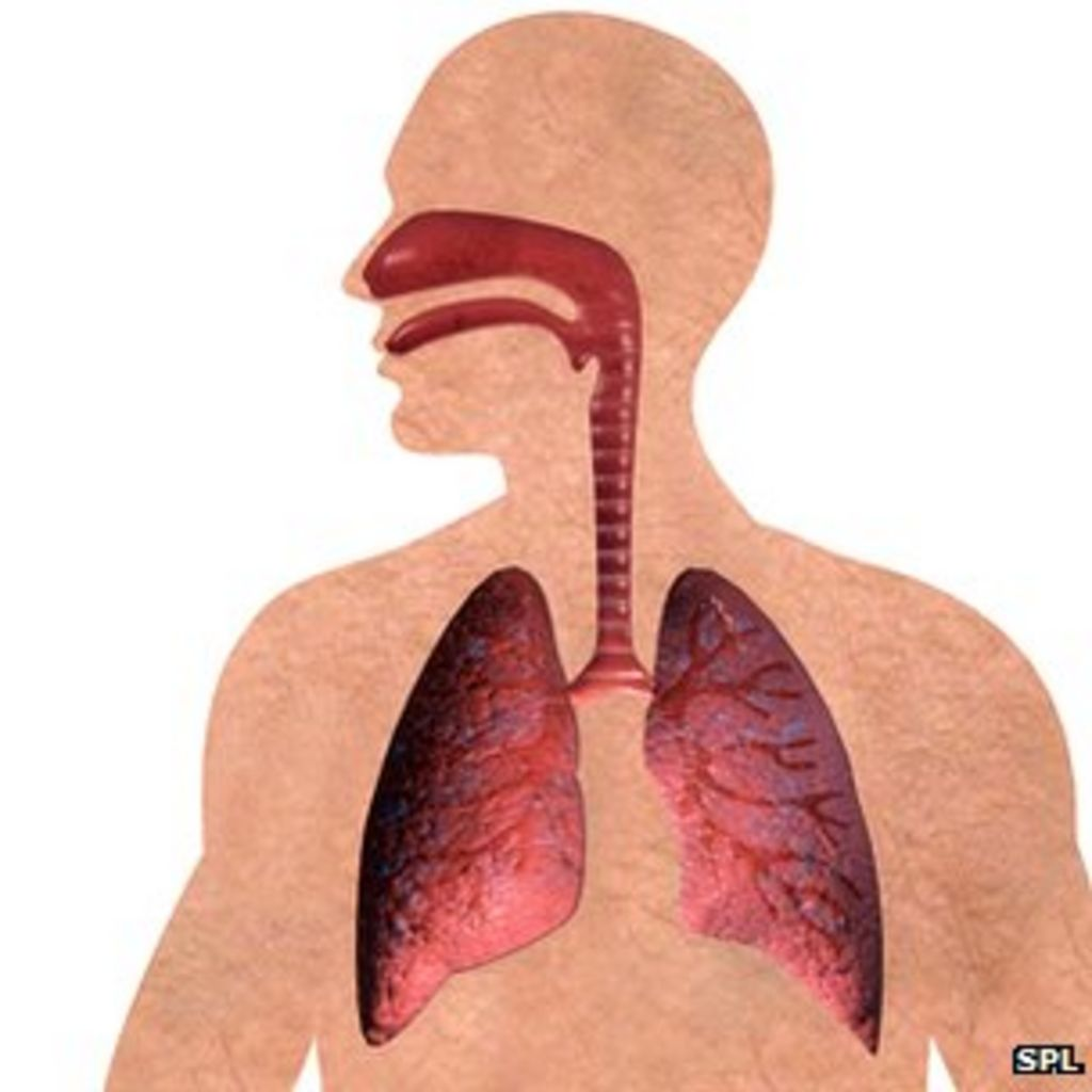 Lung diseases cause one in 10 deaths across Europe - BBC News