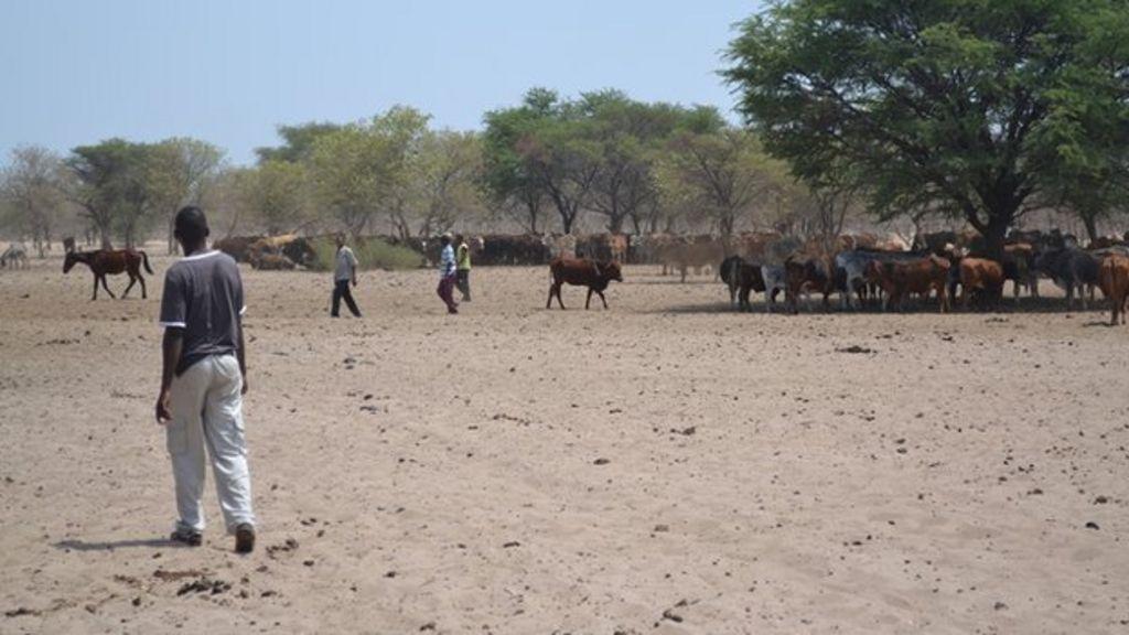 Botswana Bushmen: Modern life is destroying us - BBC News