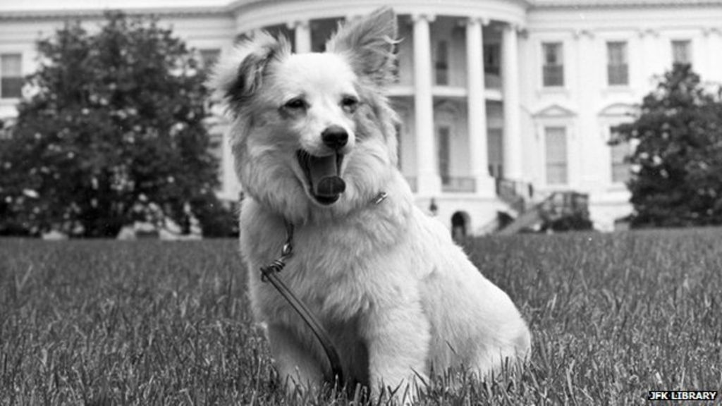 Pushinka: A Cold War puppy the Kennedys loved - BBC News