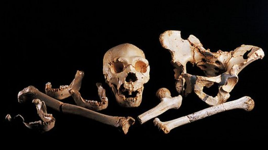 Leg Bone Gives Up Oldest Human Dna Bbc News