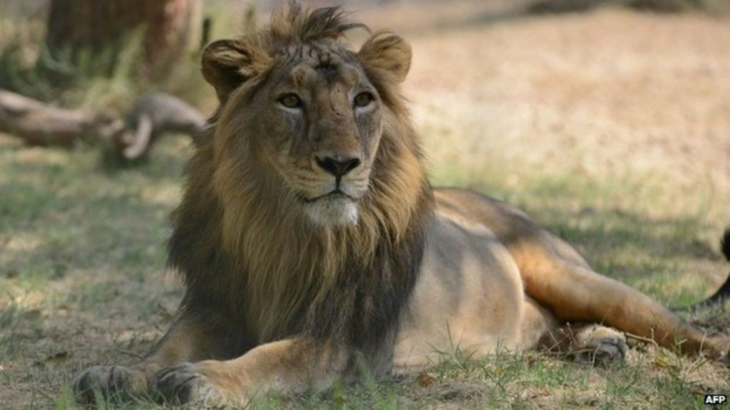 Lion Names For Male Cats