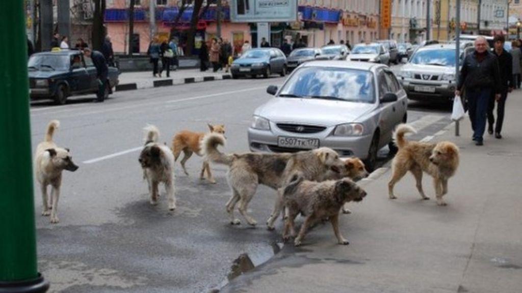 """Képtalálat a következőre: """"bosznia hercegovina stray dogs"""""""