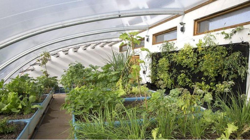 Aquaponic farm scheme produces fish and vegetables - BBC News