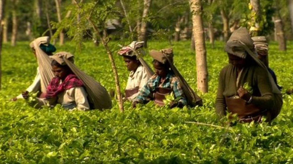 worlds primary tea producer - 640×360