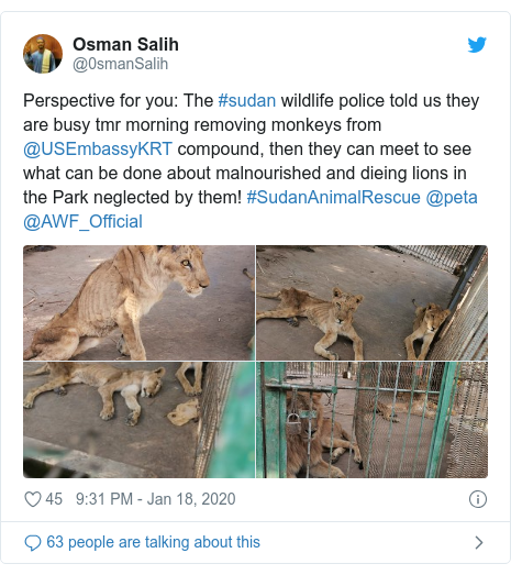 Twitter post by @0smanSalih: Perspective for you  The #sudan wildlife police told us they are busy tmr morning removing monkeys from @USEmbassyKRT compound, then they can meet to see what can be done about malnourished and dieing lions in the Park neglected by them! #SudanAnimalRescue @peta @AWF_Official