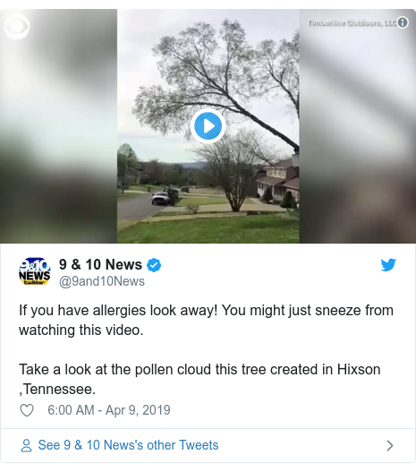 Twitter post by @9and10News: If you have allergies look away! You might just sneeze from watching this video.Take a look at the pollen cloud this tree created in Hixson ,Tennessee.