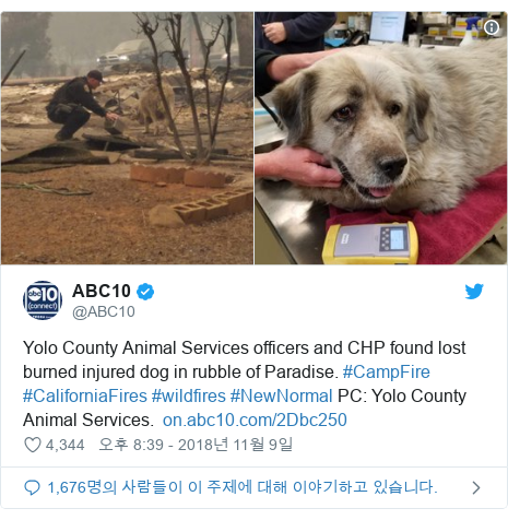 Twitter post by @ABC10: Yolo County Animal Services officers and CHP found lost burned injured dog in rubble of Paradise. #CampFire #CaliforniaFires #wildfires #NewNormal PC  Yolo County Animal Services.