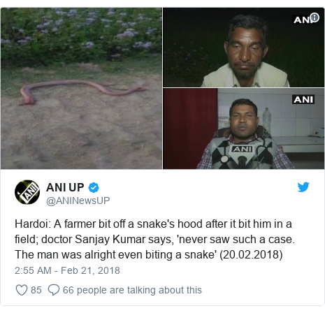 Twitter post by @ANINewsUP: Hardoi  A farmer bit off a snake's hood after it bit him in a field; doctor Sanjay Kumar says, 'never saw such a case. The man was alright even biting a snake' (20.02.2018)