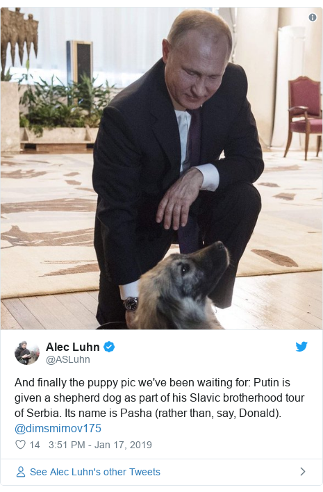 Twitter post by @ASLuhn: And finally the puppy pic we've been waiting for  Putin is given a shepherd dog as part of his Slavic brotherhood tour of Serbia. Its name is Pasha (rather than, say, Donald). @dimsmirnov175