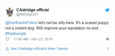 Twitter post by @Aldridge201: @NorthantsPolice let's not be silly here. It's a scared puppy not a violent dog. Will improve your reputation no end. #freebungle
