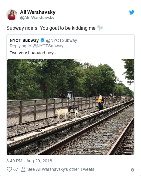 Twitter post by @Ali_Warshavsky: Subway riders  You goat to be kidding me 🐐