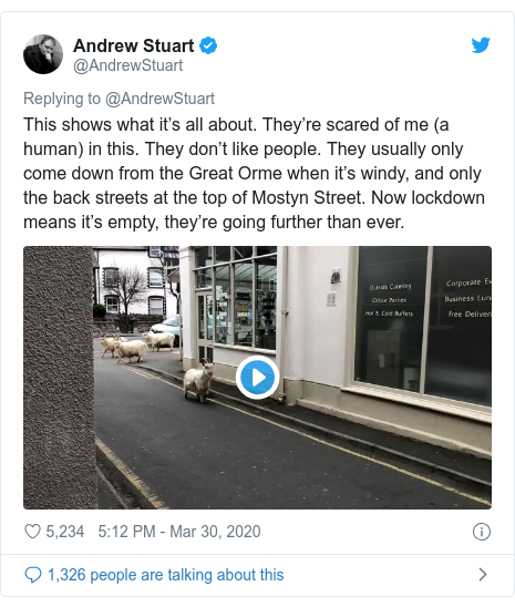 Twitter post by @AndrewStuart: This shows what it's all about. They're scared of me (a human) in this. They don't like people. They usually only come down from the Great Orme when it's windy, and only the back streets at the top of Mostyn Street. Now lockdown means it's empty, they're going further than ever.